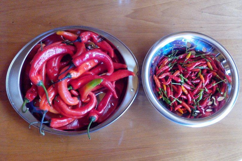 Foto de cima de dois potes de inox com as pimentas malagueta já separadas e prontas para serem cortadas.